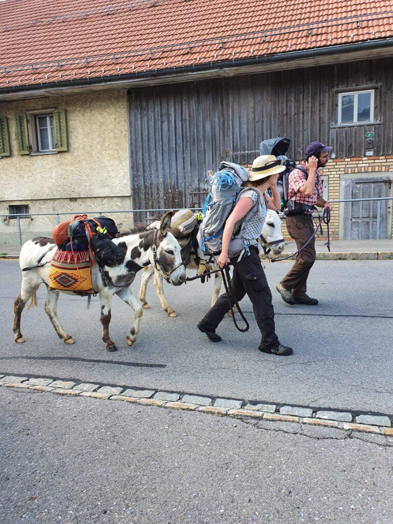 Esel-Trekking